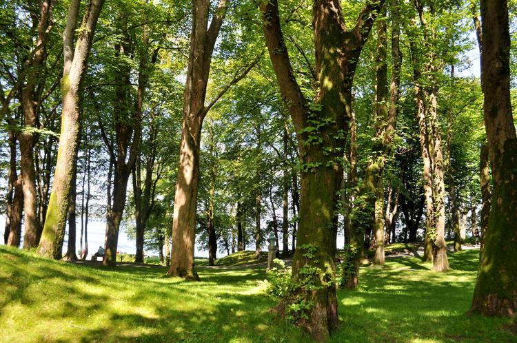 Skygge under trærne i Nordnesparken. Foto.