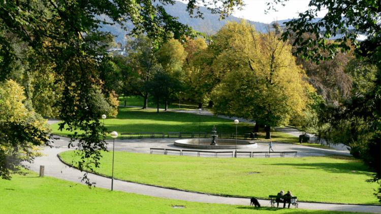 På tur med hunden i parken. Foto.