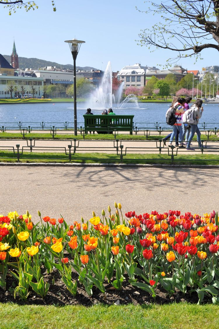 Photo of Byparken in the Spring, with the lake and tulips