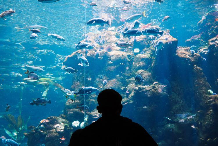 En person som står og ser på et stort akvarium.