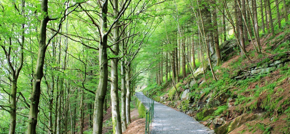 Turvei opp til Fløyen. Foto.