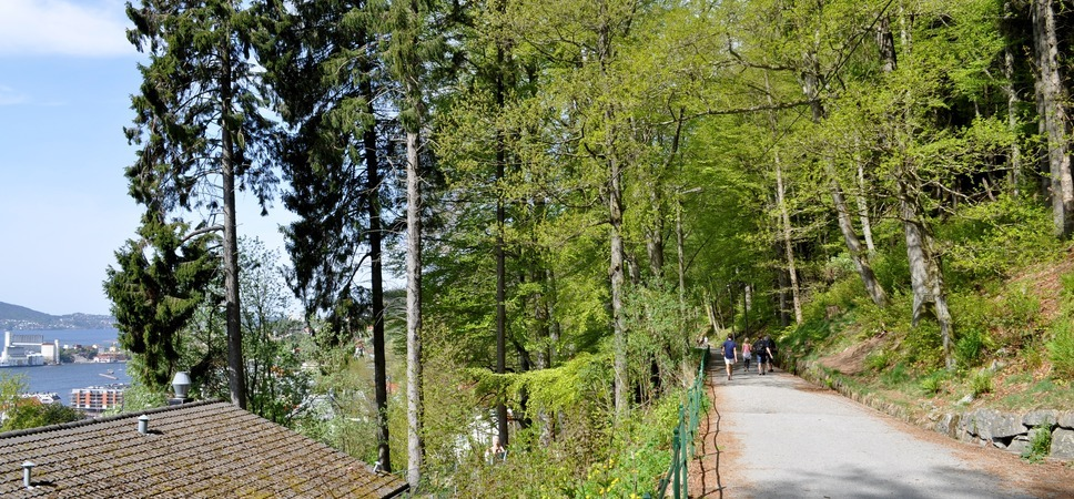 Turgåere på Fjellveien. Foto.